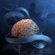 Engineers decode conversations in brain's motor cortex