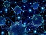 Neuro Design Suite Open for Business